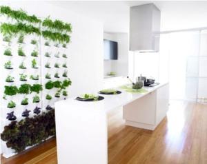 herbs-we-need-kitchen-herb-garden
