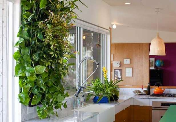 A Grow Wall Incorporated Into a Modern Kitchen of Today